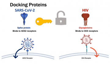 Image showing docking proteins and mechanisms of HIV and SARS-CoV-2.